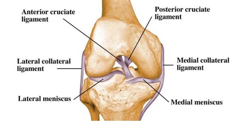 Koleno Anatomija